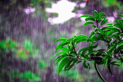 Elba bei Regen