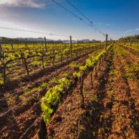 Weingut La Chiusa